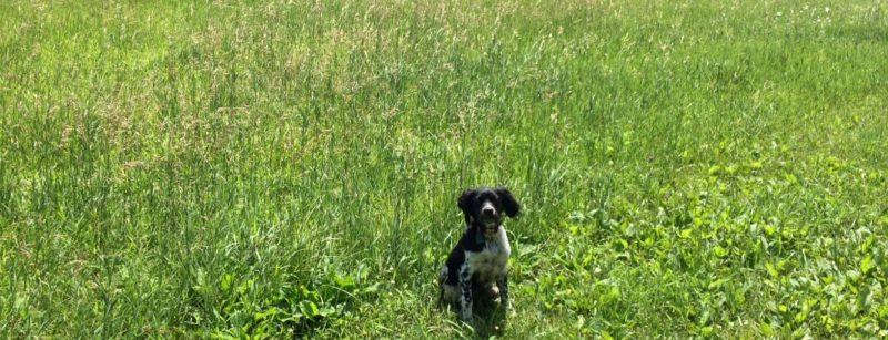 Dog Training Eden Prairie
